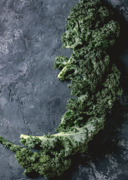grønkål økologisk